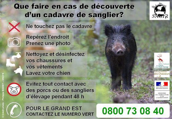 Surveillance de la peste porcine africaine dans le Grand Est
