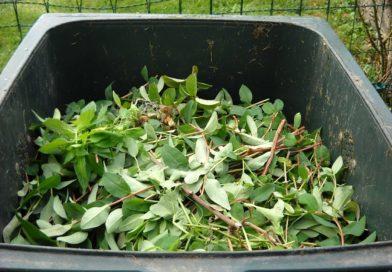 collecte de végétaux