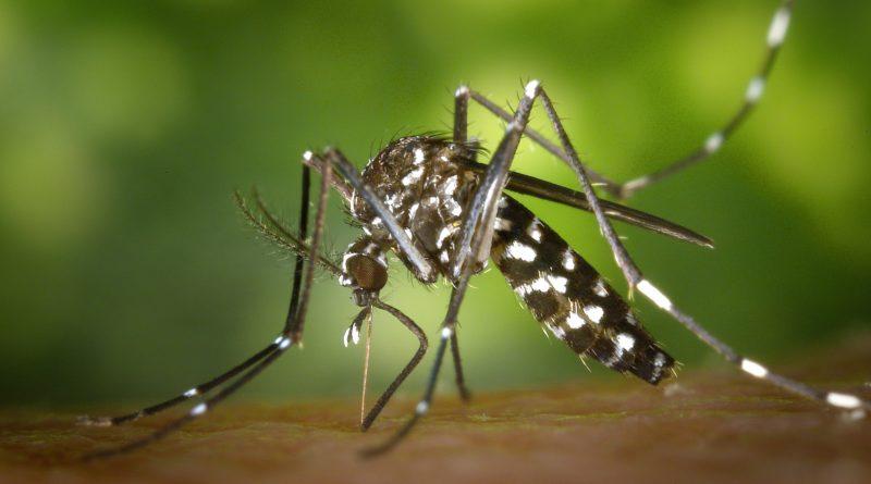 lutte contre la prolifération des moustiques tigres