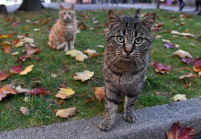Disparitions inquiétantes de chats